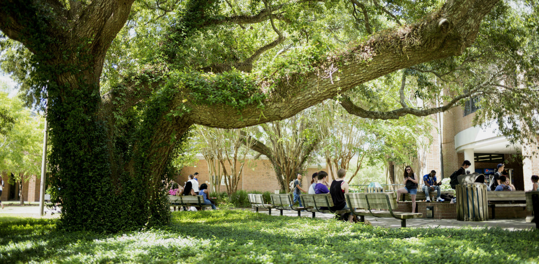 Students walking and sitting under the big oak near the Science and Math building